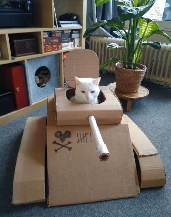 Cardboard Cat Tank
